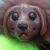 Bailey icon.png